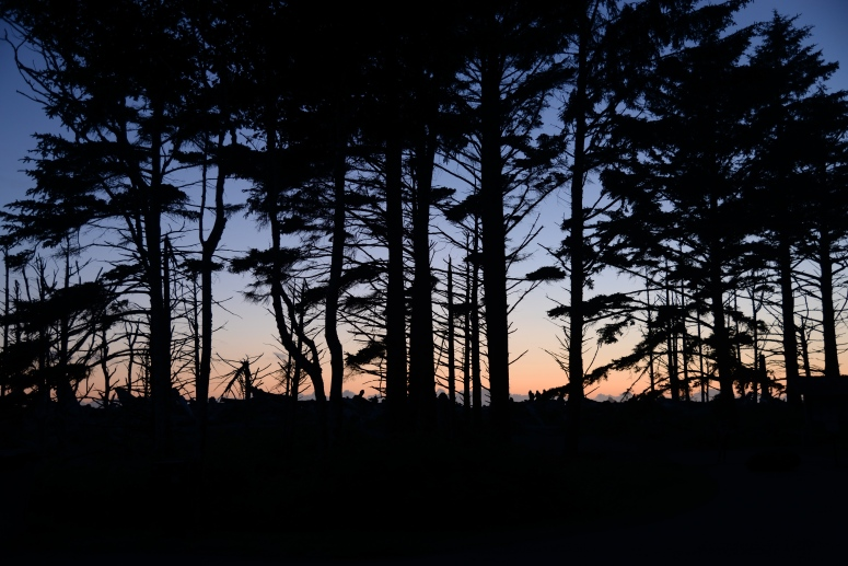 Rialto_Beach_Forest_Sunset_DNXB_Travel