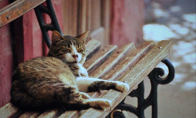 Lazy cat Pueblitos Dominicos Chile Santiago DNXB D90 dongnanxibei Nikon Nap naptime