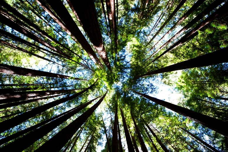 armstrong-redwood-reserve-sonoma-forest-state-park-d750-nikon-dnxb-dongnanxibei