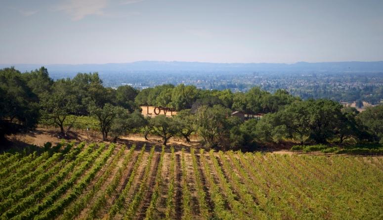 paradise-ridge-love-sculpture-statue-vineyard-winery-wine-tasting-d750-nikon-dnxb-dongnanxibei